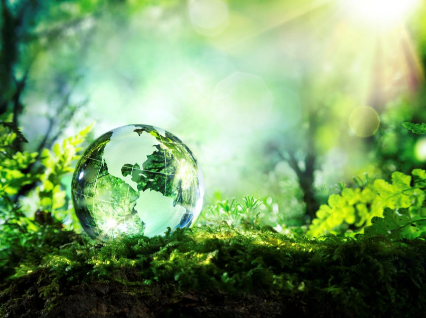 Awesome Eco-friendly Living Ideas To Save Money