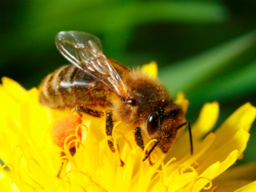 This is how you can save the bees that feed the world!